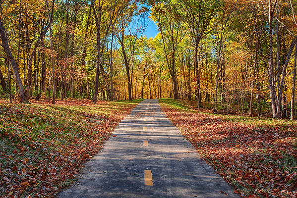 Painted Tree Path