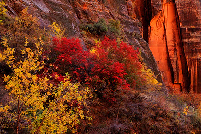 Canyon Autumn Color