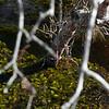 Plant Life - Oklawaha River