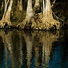 Cypress Reflections - Dora Canal - Lake County Florida