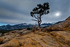 Rocky Mountain National Park - Lone Tree