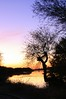 sunset_tree_2009-4