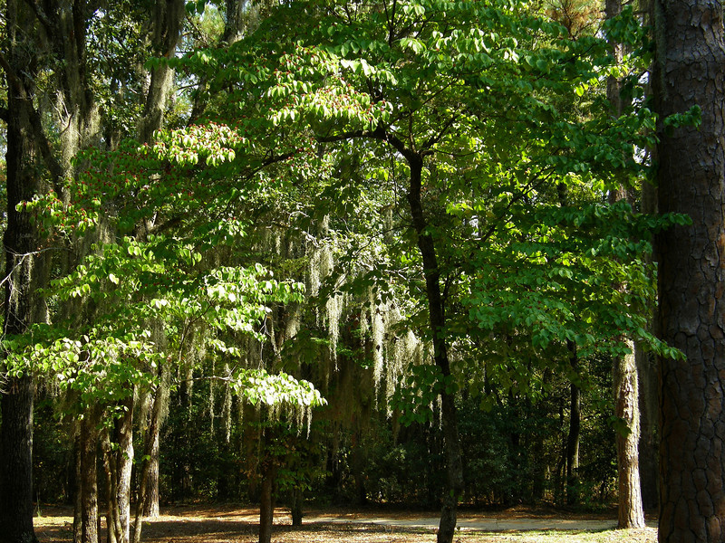 Poinsett State Park, SC.  State Park named after Joel Roberts Poinsett who famously introduced the poinsettia to the US while a minister for the US government in Mexico.  He was a Charleston native who traveled throughout Europe and South America during the 1800's.