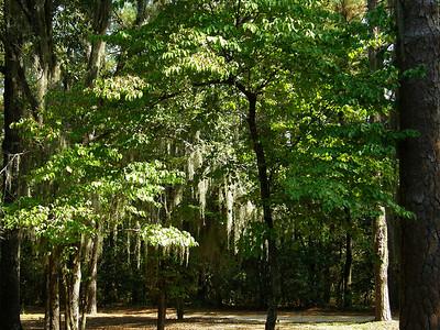 Scenic South Carolina
