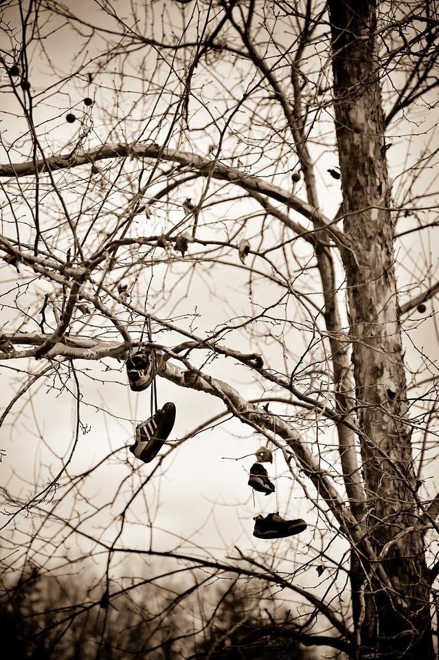 Shoe tree, Kentucky (USA)