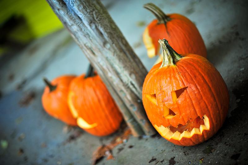 Carved pumpkins, Kentucky (USA)