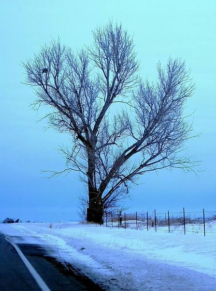 Blue Winter<br /> Twin Falls, Idaho