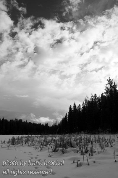 Tracks in snow on North Star Lake in S.E. British Columbia