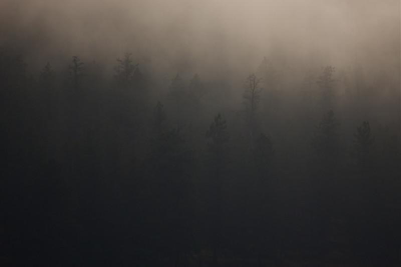 Foggy Forest, western Montana