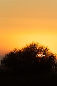 Sunset , Merced NWR