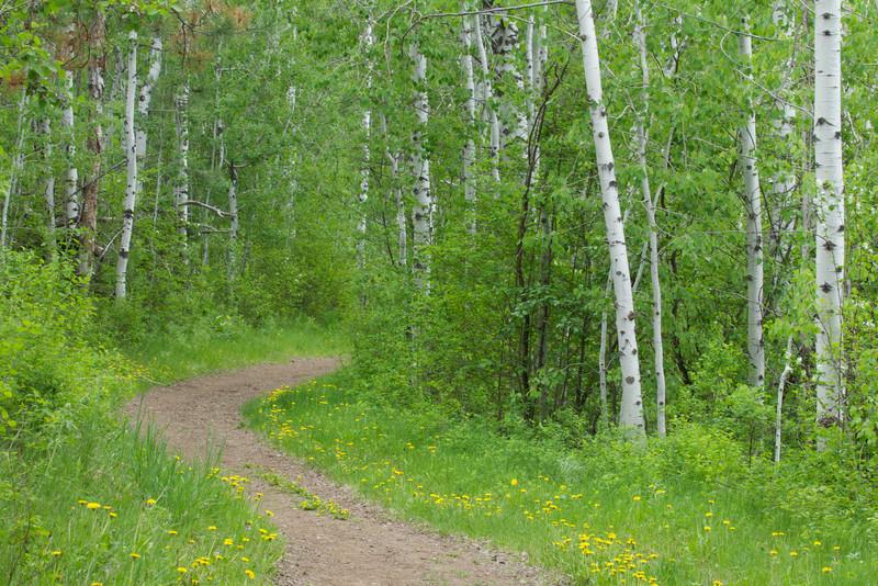 Beaver Pond Trail, Methow Valley, Okanogan County, Washington