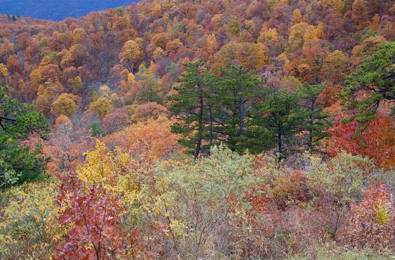 Fall colors, Shenandoah National Park, Virginia