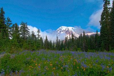 Wildflowers, Mount Rainier