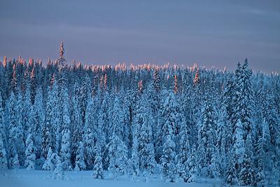 Morgenlicht streift die Baumwipfel - Lappland, Schweden  Morning light touches the treetops - Lapland, Sweden