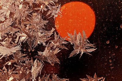 Ice flowers - Arvidsjaur, Norrbottens län, Sweden  - mehr dazu im Blog: Kunstwerke aus Eis