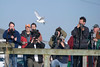 Ivory Gull with onlookers, Cape May, NJ