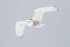 Awesomely close Snowy Owl in flight