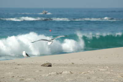 gulls (4)