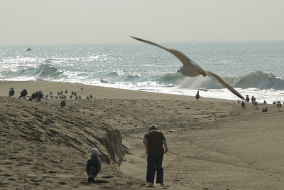 gulls (3)