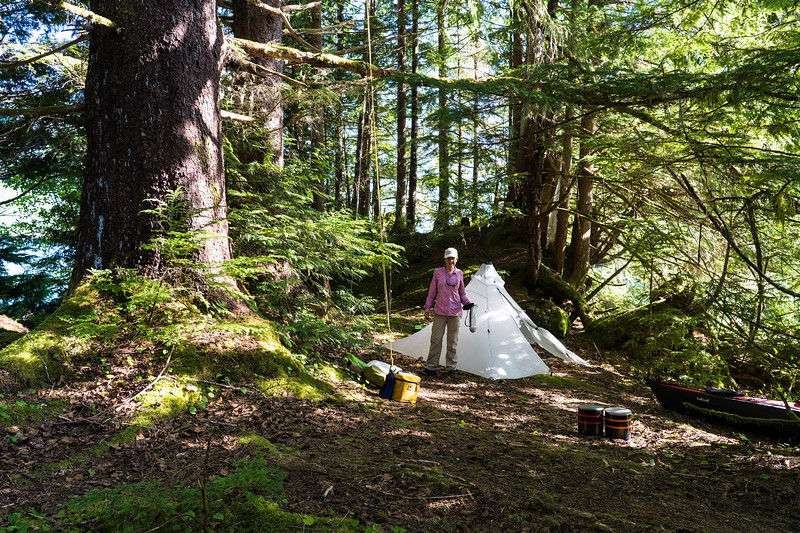 Big Sitka Spruce To Hang Food From