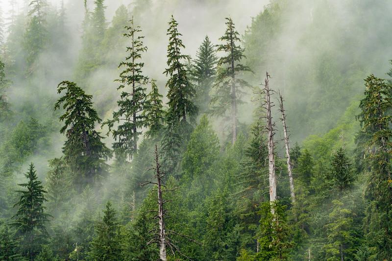 Misty morning at Misty Fjords