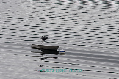 Heron, Rowboat and Ripples