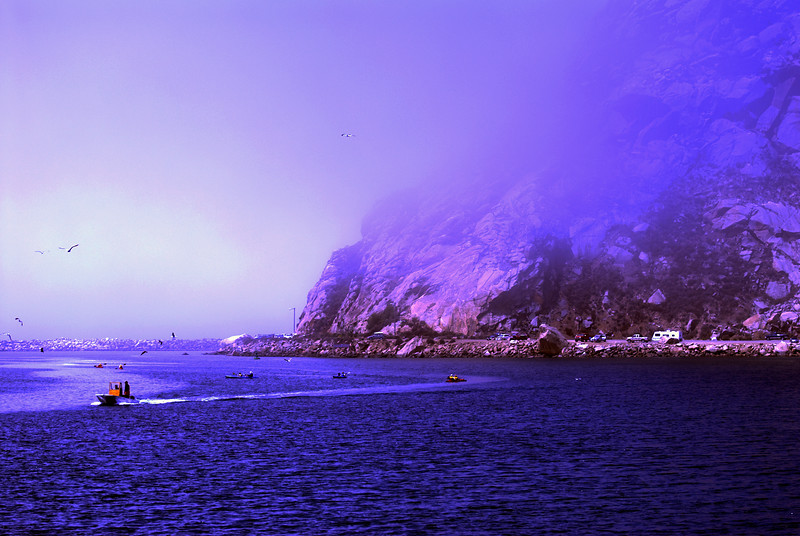 Morro Rock In Fog