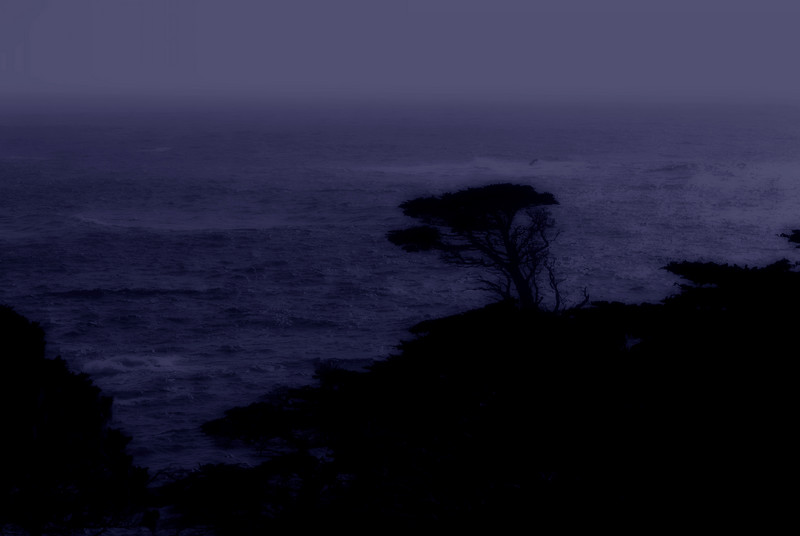 Lone Tree Silhouette