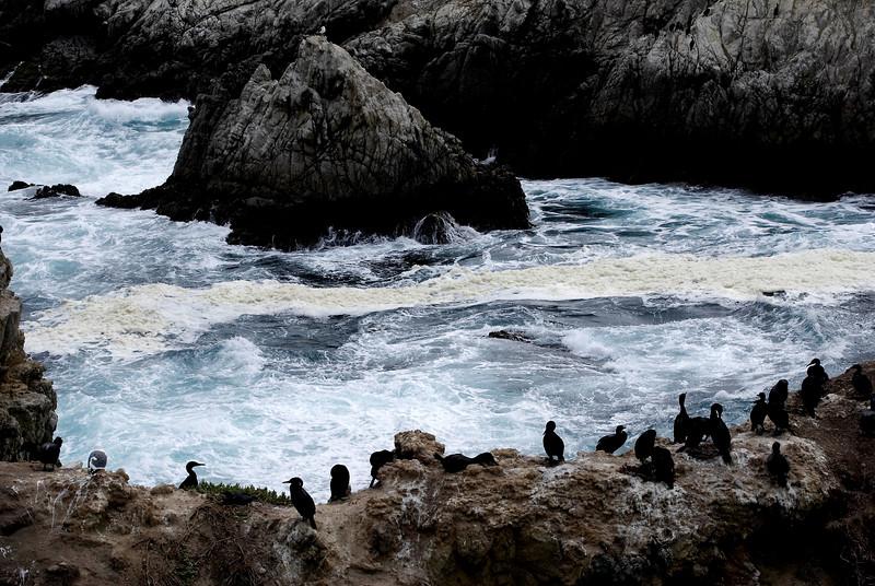 China Cove and Brandt's Cormorants