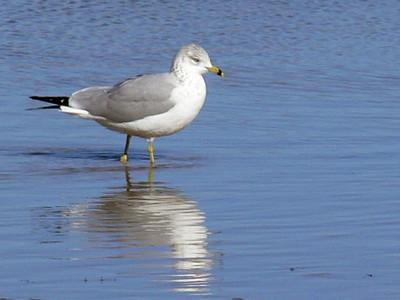 Seagulls In Brownwood !!
