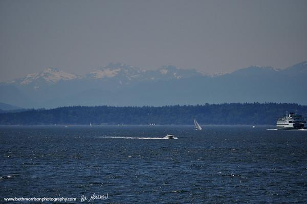 Seagulls and Sailboats Seattle