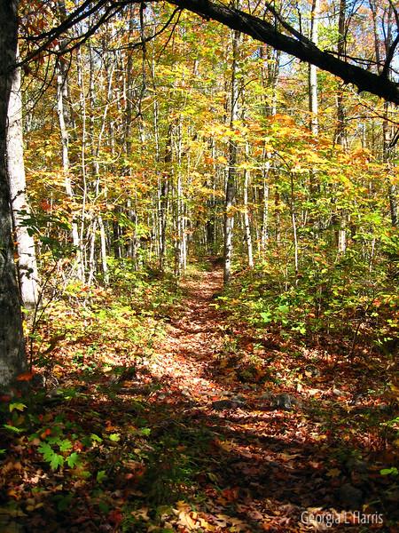 Maine - on Appalachian Trail
