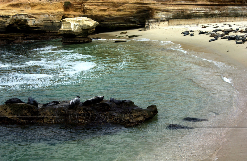 Seals on the beach at Children's Pool in La Jolla