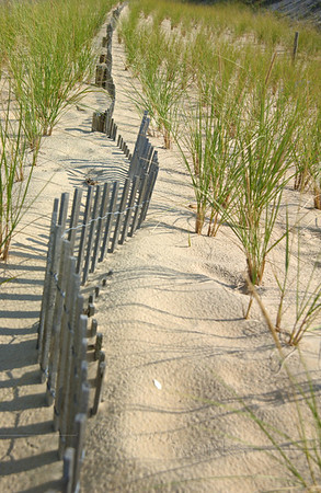 Dune Fence at Herring Point  -  Cape Henlopen, Delaware   [Fx]