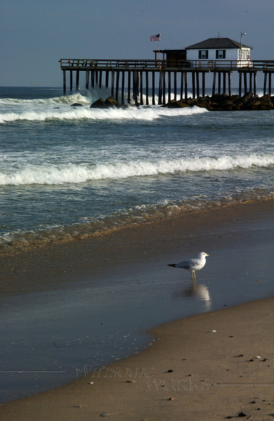 Gull with fishing pier in Ocean Grove, NJ