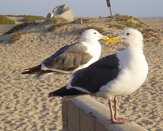 Seagulls at the Seashore.<br /> <br /> ASA 64, F/5.2, 1/200sec.