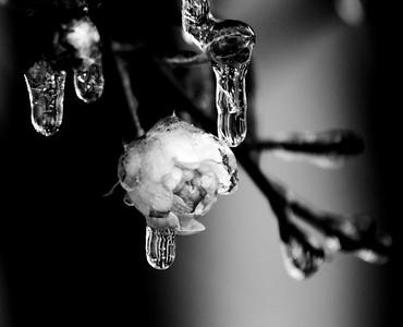 iced - original