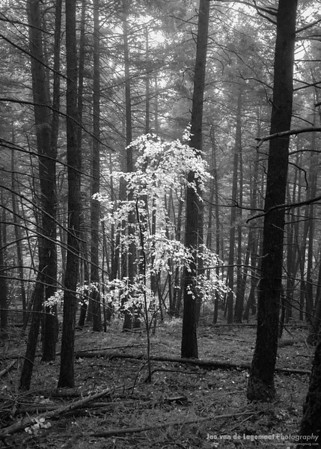 Ghost in the forest