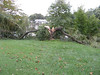 Weeping willow split in half by Hurricane Irene. A tragic end to a beautiful mature tree.<br /> <br /> Wilde Lake Park, Columbia, Maryland<br /> <br /> 8-29-11