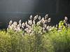Grasses in the sun<br /> <br /> 10-28-07