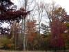 Hollofield Area, Patapsco Valley State Park, Maryland<br /> 11-8-05