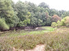 The Centennial vernal pool has receded considerably after a dry summer.<br /> <br /> 9-23-06