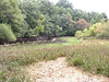 The side of the greatly reduced vernal pool. <br /> <br /> 9-23-06