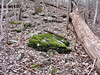 A moss-covered rock glows vivid green in the brown late-winter woods. <br /> 3-11-06