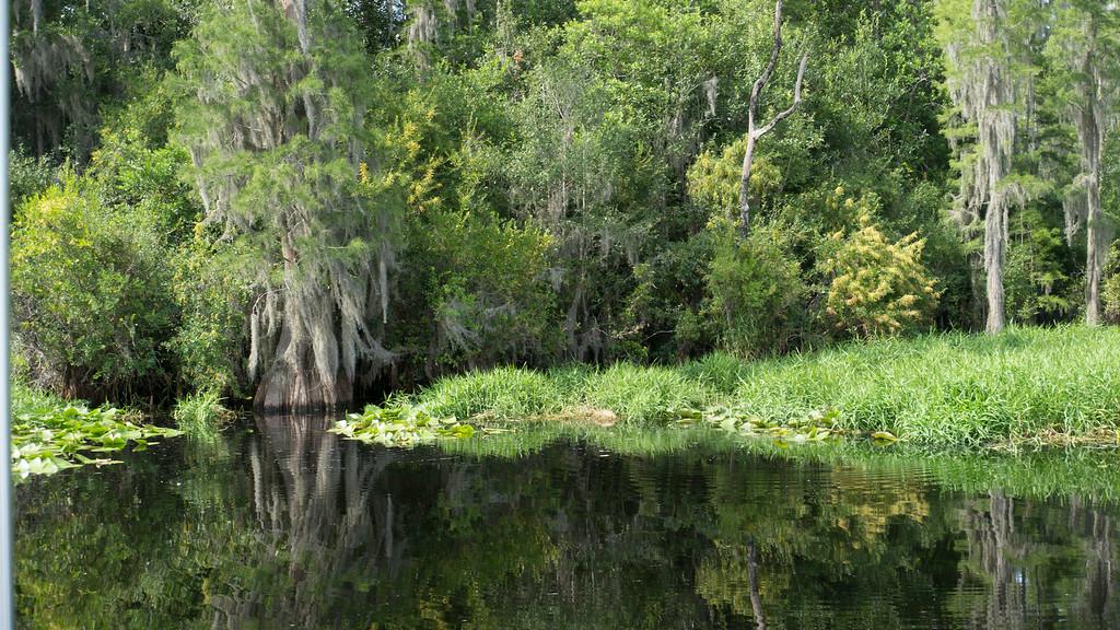 Images taken August 2014 in Okefenokee Swamp
