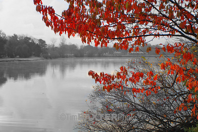 Red leaves.  Playing with Photoshop.  I just like the way it looks.