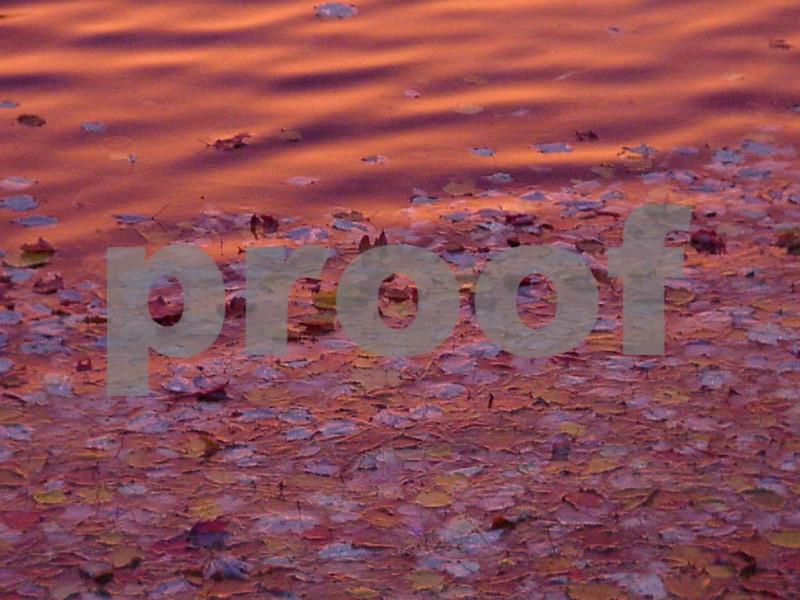 Leaves at sunrise