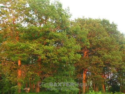 Glowy Trees