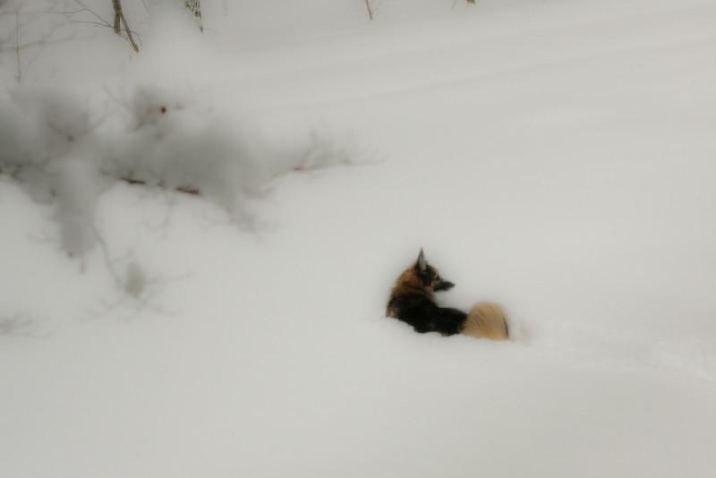 _-41_snow