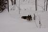 IMG_7585_snow